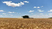 Top 20 in agriculture: Good prices and a good crop