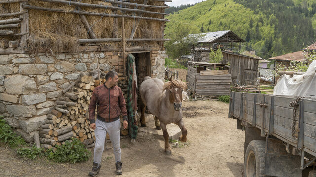 Mysa Djikov, one of Sabie's sons, uses a big Russian truck while working as a lumberjack but keeps a Russian heavy draft horse in the stable next to cows. He used to work in the agricultural sector in the UK but has returned to his childhood village.