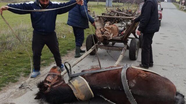 Roma volunteers help a fallen horse